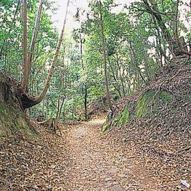 Mt. Kasuga Primeval Forest