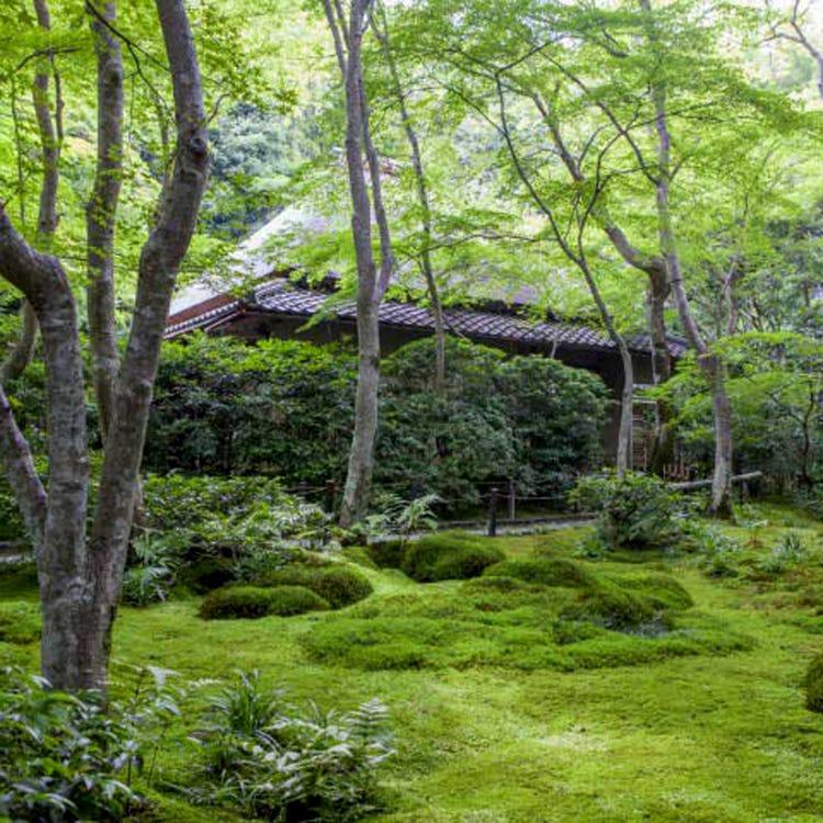 Giou-ji Temple