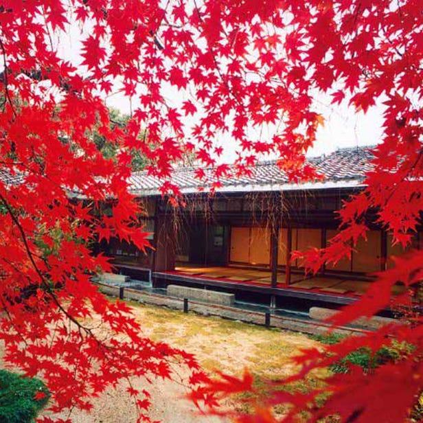 Taizo-in Temple
