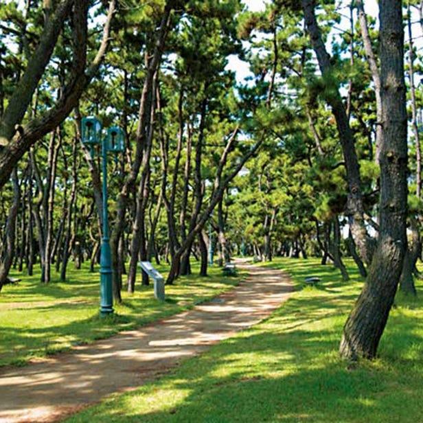 마이코 공원