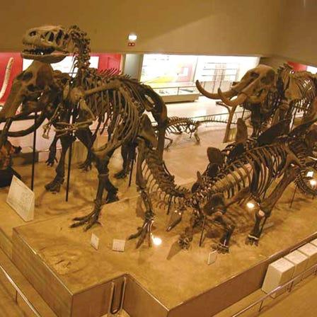 오사카시립 자연사박물관