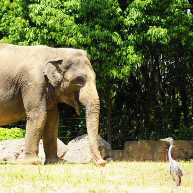 덴노지 동물원