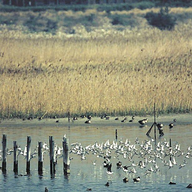 野鳥園臨港綠地