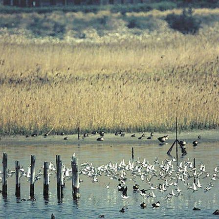 野鸟园临港绿地