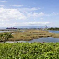 Osaka Nanko Bird Sanctuary