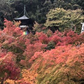 Zenrin-ji Temple (Eikan-do)