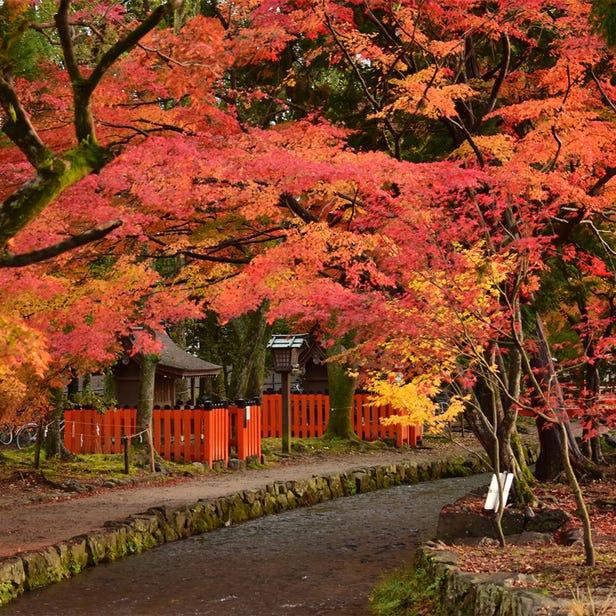 Kamo-wake-ikazuchi-jinja Shrine (Kamigamo Shrine)