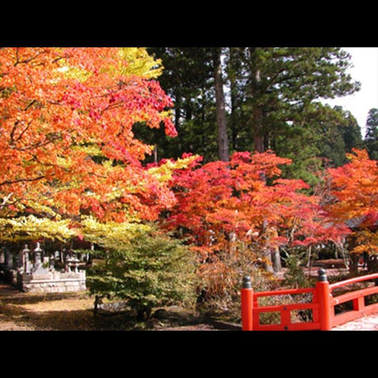 高野山 (和歌山・高野山|森林・山岳) - LIVE JAPAN (日本の旅行・観光 ...