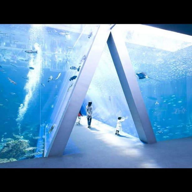 環境水族館海藍寶石福島