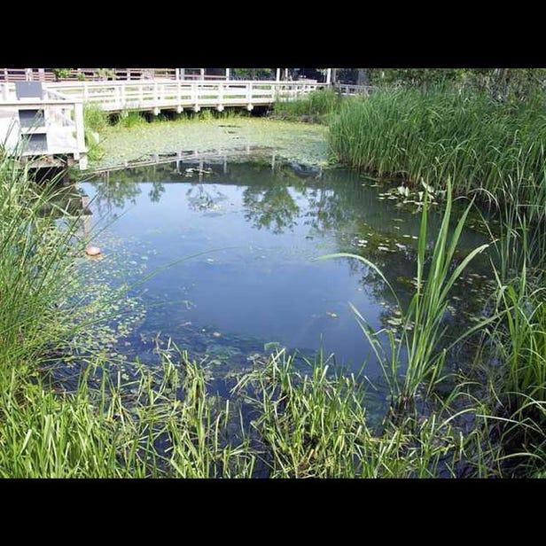 Niigata City Aquarium Marinepia Nihonkai