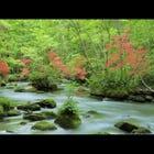 奧入瀨溪流