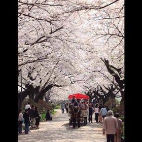 기타카미 시립 공원 덴쇼치