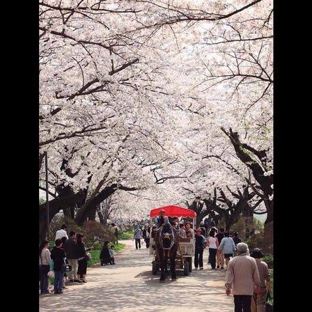 Kitakami Tenshochi Park