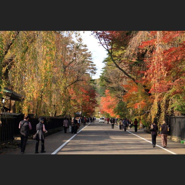 """1620年由该地区的领主芦名义胜建造的角馆街区,据说之所以被称为陆奥小京都,是因为芦名家系断绝后成为领主的佐竹义邻出身于京都皇族,大量采用了京都文化。相传武家屋敷通两旁的枝垂樱也是始于这个时期从京都运来的树苗。 对外公开的6间武士宅邸当中有一间是石黑家,是负责佐竹北家司库及会计的高级武士的宅邸,穿过药医门,建有一间在带山墙顶封檐板的正面玄关设置有侧面玄关的主房,一眼便能看出房屋的格式非常高。门口有1809年的上梁牌,可见主房也是同一时期的建筑。 宅邸内有工作人员提供向导和解说。4月下旬至新绿季节的5月―6月,武家屋敷通被樱花笼罩。被指定为国家重要无形民俗文化财产的""""角馆祭之山节""""(9月7日―9日三天举行)也非常值得一看。此外,将武家屋敷通染得通红的10月的红叶美景、在谧静的环境中枝垂樱树梢悄悄盛开的冬季""""雪樱""""也不容错过。"""