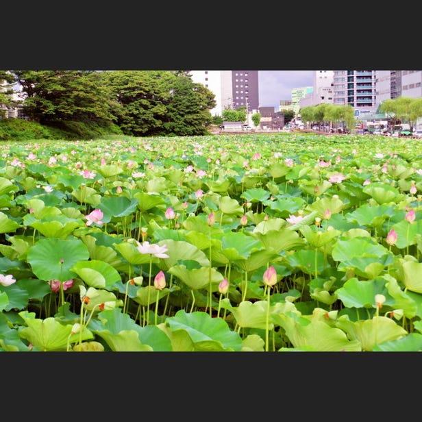 Senshu Park
