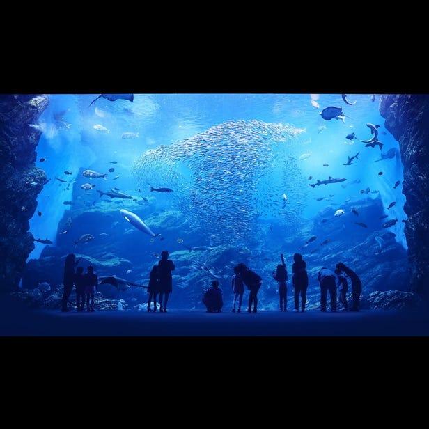 센다이 바다의 숲 수족관