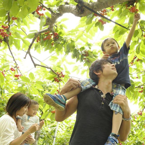 Ohashi Cherry Farm