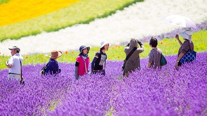 北海道旅游出发前必读!北海道天气与穿搭【春夏篇】