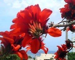 花 HANA の画像
