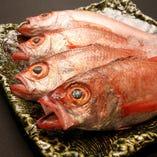 【高級魚】のど黒 【佐渡産や、上越産など、国内産】