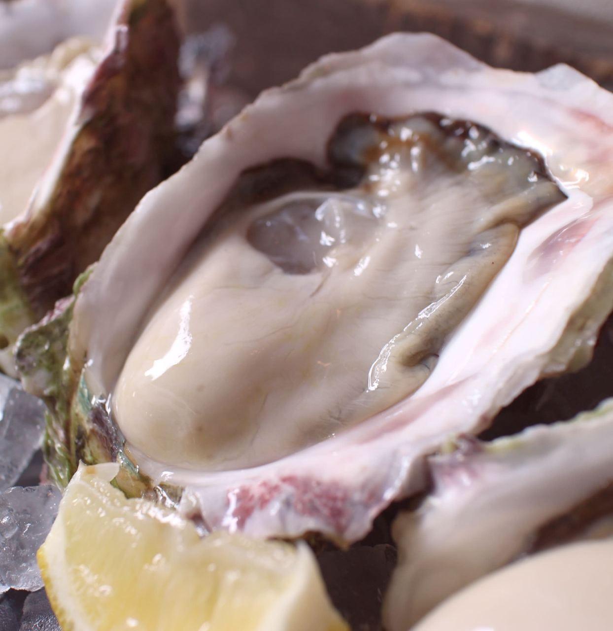 夏は瀬戸内の岩牡蠣が最高!