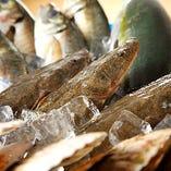 三陸から届く旬の新鮮魚介