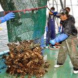 宮城県石巻市の漁港から毎日仕入れております