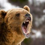 季節限定!めずらしい熊【北海道】