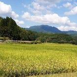 熊本四季農園【ヒノヒカリ】【菊池】