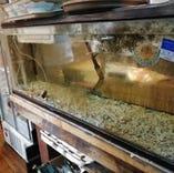 毎日新鮮な魚が水槽で泳いでます。※写真は魚待ち