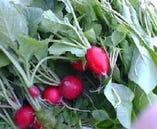 季節感たっぷり!旬の食材を使ったおすすめ料理を多数ご用意