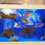 新鮮魚介は生簀で管理。捌きたてが楽しめるメニューも豊富