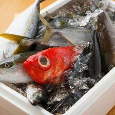 毎朝仕入れ!小田原漁港の朝獲れ鮮魚