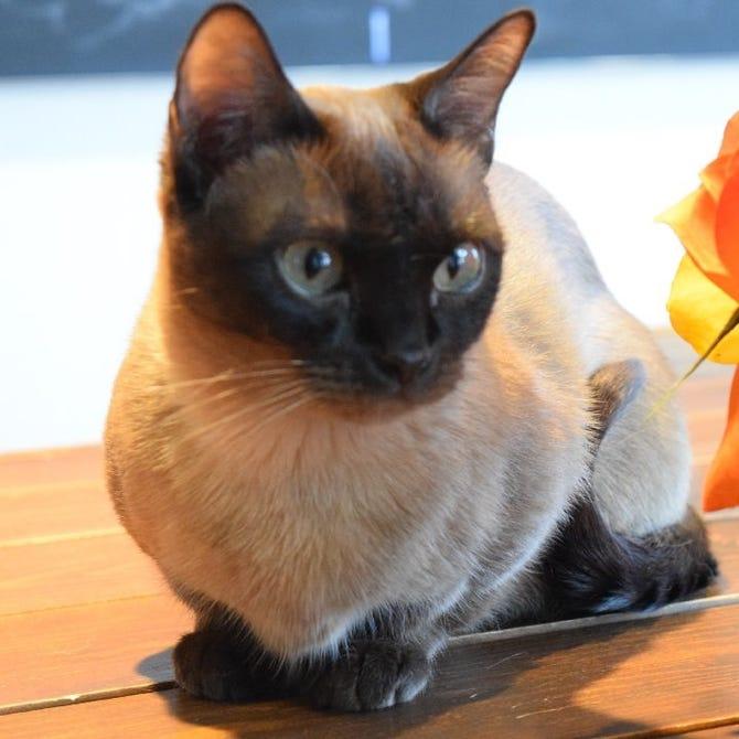 カフェ 五泉 猫
