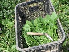 新鮮食材を農場から厳選直送!
