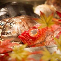 踊る魚 銀座店