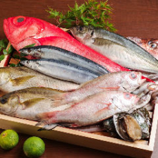 全国各地から厳選して仕入れる旨い魚