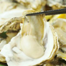 生牡蠣が365日…なんと250円で提供!