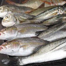 鹿児島から空輸で旬の魚を仕入れ!