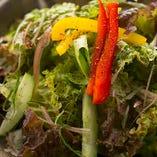 新鮮野菜(クレソン)【栃木県】