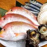 豊洲直送鮮魚【豊洲】