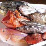 チヌ、ハチガラ、イジミなど毎日入荷の銘魚【北海道】