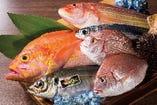 築地直送!「鮮魚刺し盛り合わせ」 毎日選りすぐりの鮮魚をご提供中♪