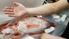 毎日新鮮な魚が食べれます!