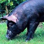 やんばる豚【沖縄県北部】
