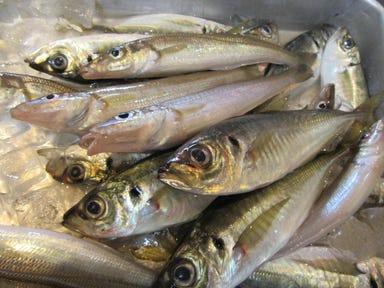 魚介バル いかり屋kitchen  メニューの画像
