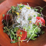 しらすと海藻のサラダ