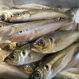 ◆漁港直送の地あじ料理は鮮度抜群!