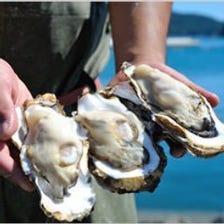 雄勝産の牡蠣はグリコーゲンたっぷり