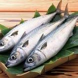 宮城県石巻漁港から直送!肉厚で脂ののった金華さば【石巻市】